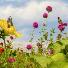 Flor de calabaza luffa y visitantes