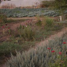 Hortalizas y aromáticas