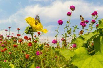 Luffa y biodiversidad