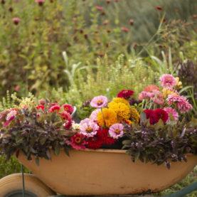 Flores de la huerta